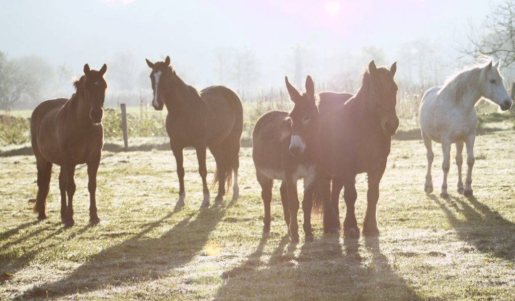 caballos de cuadra el alisal